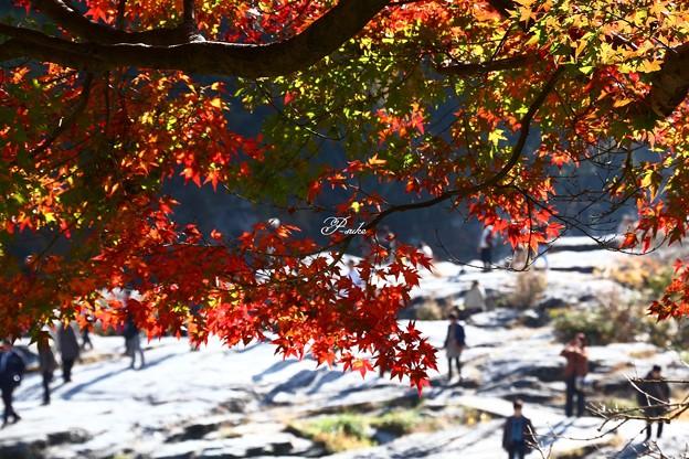 Photos: 長瀞の紅葉