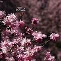 Photos: ピンクとピンク