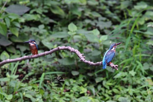 Photos: 幼鳥ツーショット