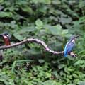 幼鳥ツーショット