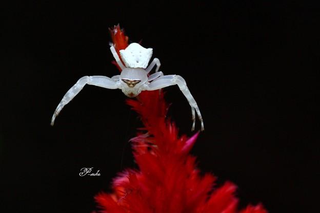 とっても綺麗な・・・・・・・・・・・・・・・クモ