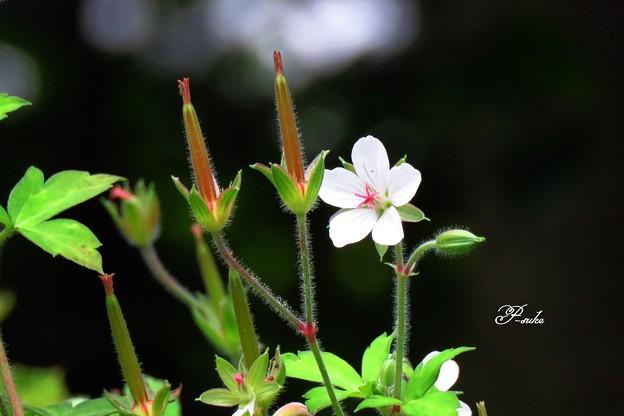 小さなお花とツインタワー