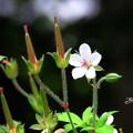 Photos: 小さなお花とツインタワー