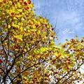 Photos: 秋の予感