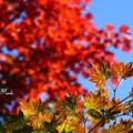 Photos: 秋ですね~