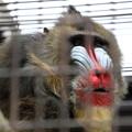 写真: 東山動植物園16
