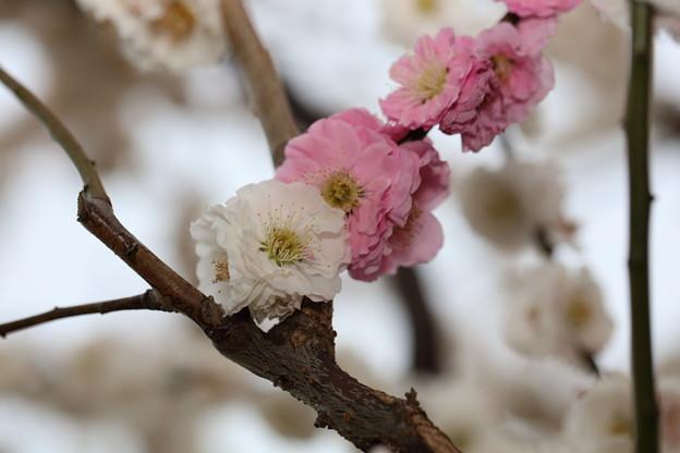 Photos: 東山動植物園26