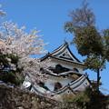 彦根城桜5Ds4