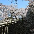 彦根城桜5Ds8