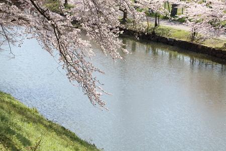 彦根城桜5Ds12