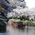 彦根城桜5Ds17