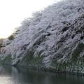 彦根城桜5Ds21