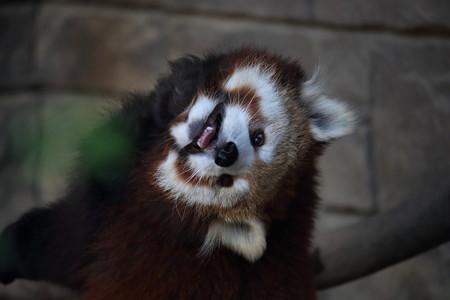 浜松市動物園29