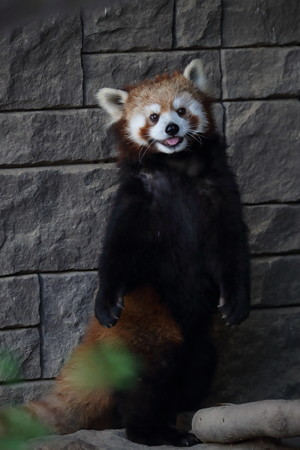 浜松市動物園34