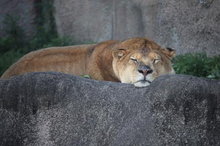 浜松市動物園37