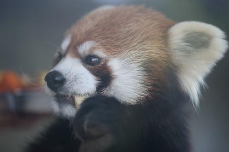 浜松市動物園54