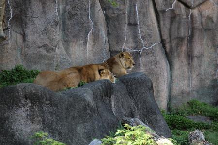 浜松市動物園64