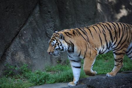 浜松市動物園66