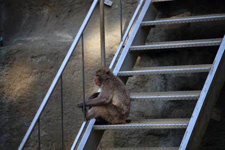 浜松市動物園69