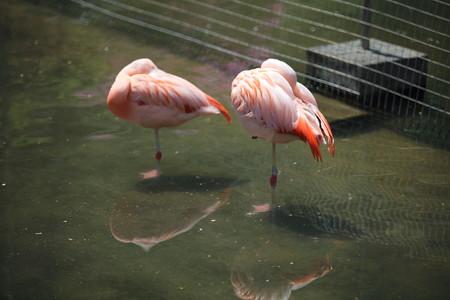 浜松市動物園86