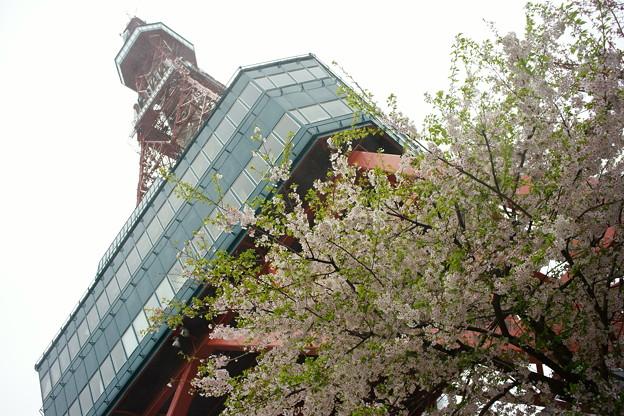 札幌テレビ塔のふもとにて