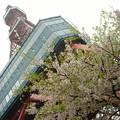 写真: 札幌テレビ塔のふもとにて