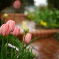 写真: 雨の中の・・・