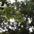 写真: 雨の中で・・・