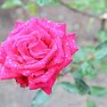 Photos: バラと・・・