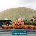 Photos: 伊豆シャボテン動物公園にて