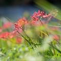 Photos: 草に囲まれて・・・