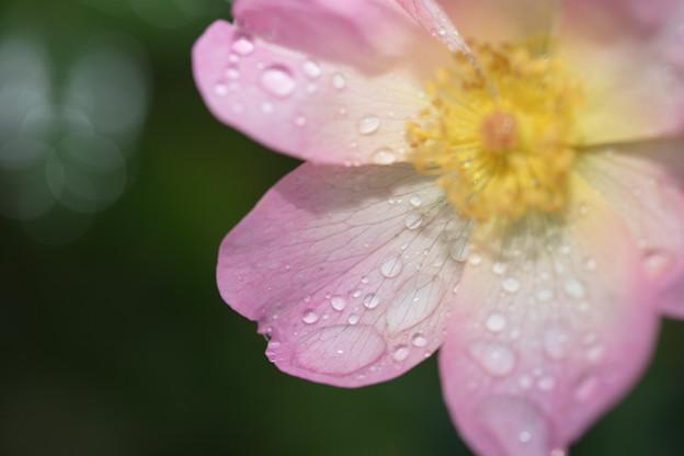雨に感謝!!