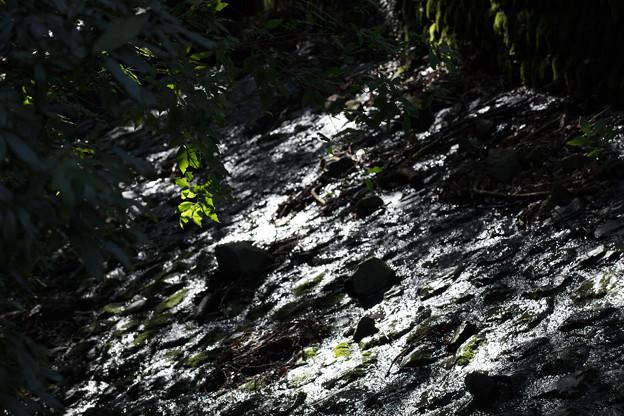Photos: 水面と暗