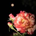 Photos: 月夜の下で