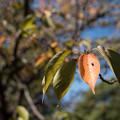 Photos: 葉の季節