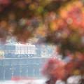Photos: 秋に囲まれて