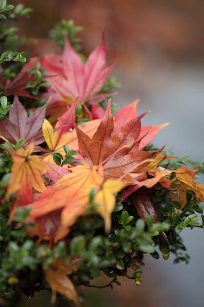 秋、盛り盛り