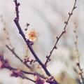 Photos: 暖かい日を待つ