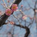 Photos: 元気に開花