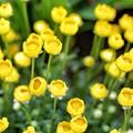 写真: yellow #2