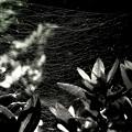 写真: 糸