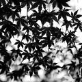 写真: 木陰