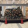セノバのクリスマスツリー