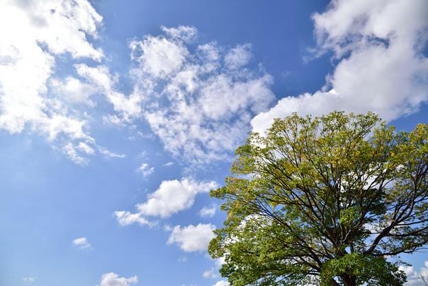 見上げた空