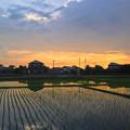 写真: 初夏の田んぼと夕焼け - 2