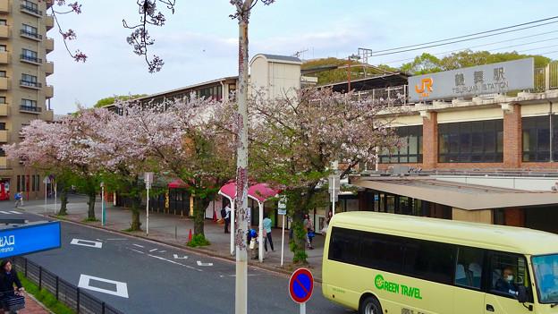 だいぶ散っていた、鶴舞公園駅前の桜(2017年4月16日) - 1