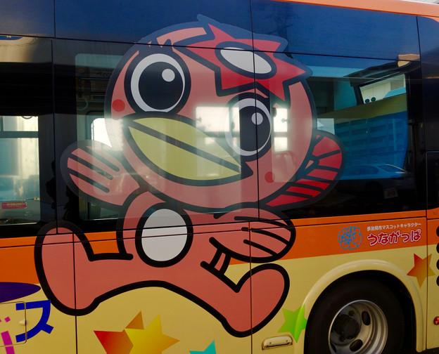 「うながっぱ」デザインの多治見市のコミュニティーバス「ききょうバス」 - 2