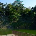 写真: 名城公園から見上げた名古屋城天守閣 - 8
