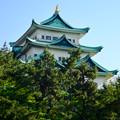 写真: 名城公園から見上げた名古屋城天守閣 - 9
