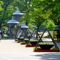 写真: 名城公園の花壇